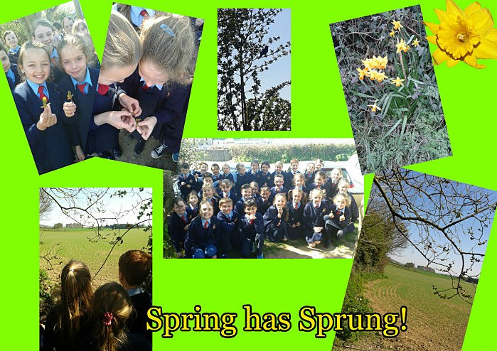 Spring has sprung collage_opt